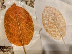 Katy leaf 1