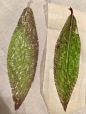 Katy leaf 2