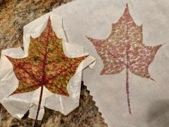 Katy leaf 3